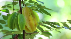 Male hand picking starfruit Stock Footage