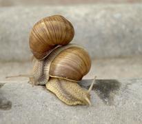 Snails family Stock Photos