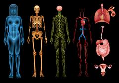 Human body systems Piirros