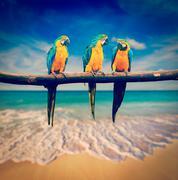 Three parrots blue-and-yellow macaw ara ararauna Stock Photos