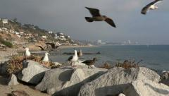 Topanga Beach Seagulls Los Angeles 2 Stock Footage