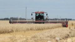 Swather cutting wheat. Three quarter view. Stock Footage