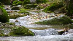 Winding Creek Cascades in Fall Racking Focus Stock Footage