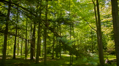 Up close with nature Stock Footage
