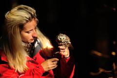 Beautiful blond falconry lady with Boreal Owl on her hand - stock photo