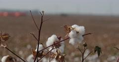 Cotton cu 2 4K Stock Footage