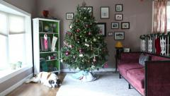 Dog lays down next to Christmas tree, video Stock Footage