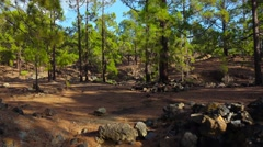POV. Walking in mountain pine woods, Tenerife, Canary islands, time-lapse. Stock Footage