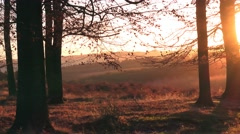 Autumn sunrise through Beech trees and landscape nature background - stock footage