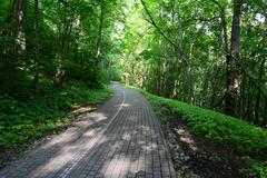 Driveway in the forest. Sigulda. - stock photo