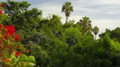 Nature landscape, jungle, trees, flowers, palms. Stock Footage