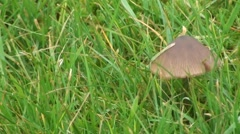 Grass and mushroom Stock Footage