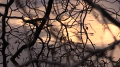 Sunset.Reflection of branch and yellow leaves in the lake Stock Footage