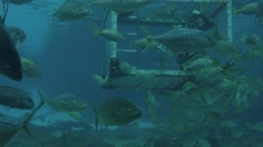 Diver feeding fish underwater Stock Footage