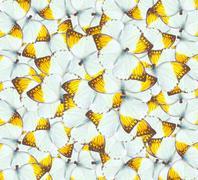 Stock Photo of butterflies