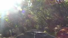 POV. Driving under canopy of mysterious relict forest, Tenerife, Canary islands. Stock Footage