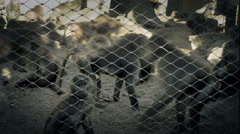 Time lapse of monkeys in a cage. - stock footage