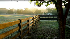 Early Morning Horse Farm Fog and Sunshine Stock Footage