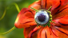 3D animation of a red alien flower with a blue eye looking around. - stock footage