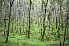 Tussock covered moss and grass in forest. - stock photo