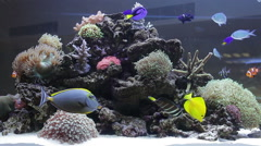 Coral colony on the reef with fishes Stock Footage