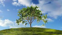 Stock Video Footage of Timelapse of a tree growing on a green hill with blue sky.