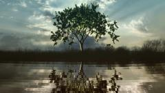 Timelapse of a growing tree reflecting in a lake. Stock Footage