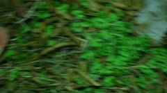 Ouiji board in the grass Stock Footage
