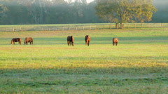 Horses Grazing Early Morning Fog and Sunshine CU Stock Footage
