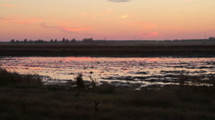 Water Fowl at sunset - stock footage