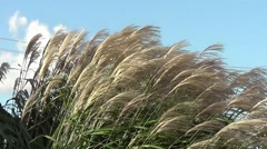 Grass moving in the wind Stock Footage