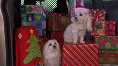 4K Merry Christmas Dogs Stock Footage