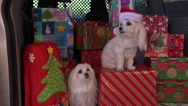 Stock Video Footage of 4K Merry Christmas Dogs