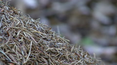 anthill with working ants 04 - stock footage