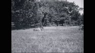 Mule walking in grass Stock Footage
