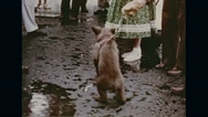 New Mexico's assistant escorting little Smokey Stock Footage