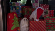 Stock Video Footage of 4K Funny Christmas Dogs Holiday Travel