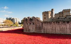 London - Poppies at the Tower of London Stock Photos