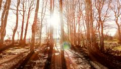 Silhouette of forest trees woods background. nature sunset scenery Stock Footage