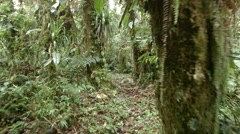 Stock Video Footage of Walking through epiphyte laden cloudforest at 2200m elevation