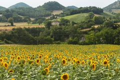 marches: country landscape - stock photo