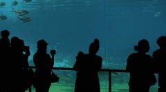 Visitors in shark bay Sea World Gold Coast Queensland Australia 01 Stock Footage