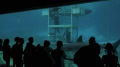 Visitors in shark bay Sea World Gold Coast Queensland Australia 02 Stock Footage