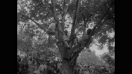American protesters sitting on tree during Civil Rights March Stock Footage
