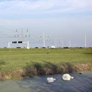 swans in duckweed and traffic on motorway in the netherlands - stock photo