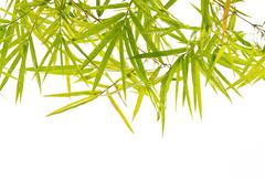 Green bamboo leaf background Stock Photos
