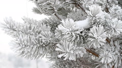 Fir-tree is covered by ice in winter Stock Footage