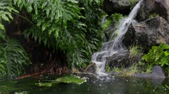 Small waterfall with lush vegetation Stock Footage