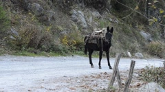 Mule in a country road Stock Footage