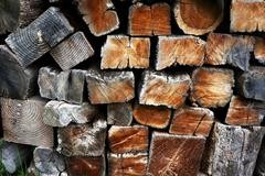 Background with pile of trunks cutted Stock Photos